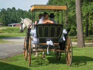 Backyard-Wedding-horse-carriage